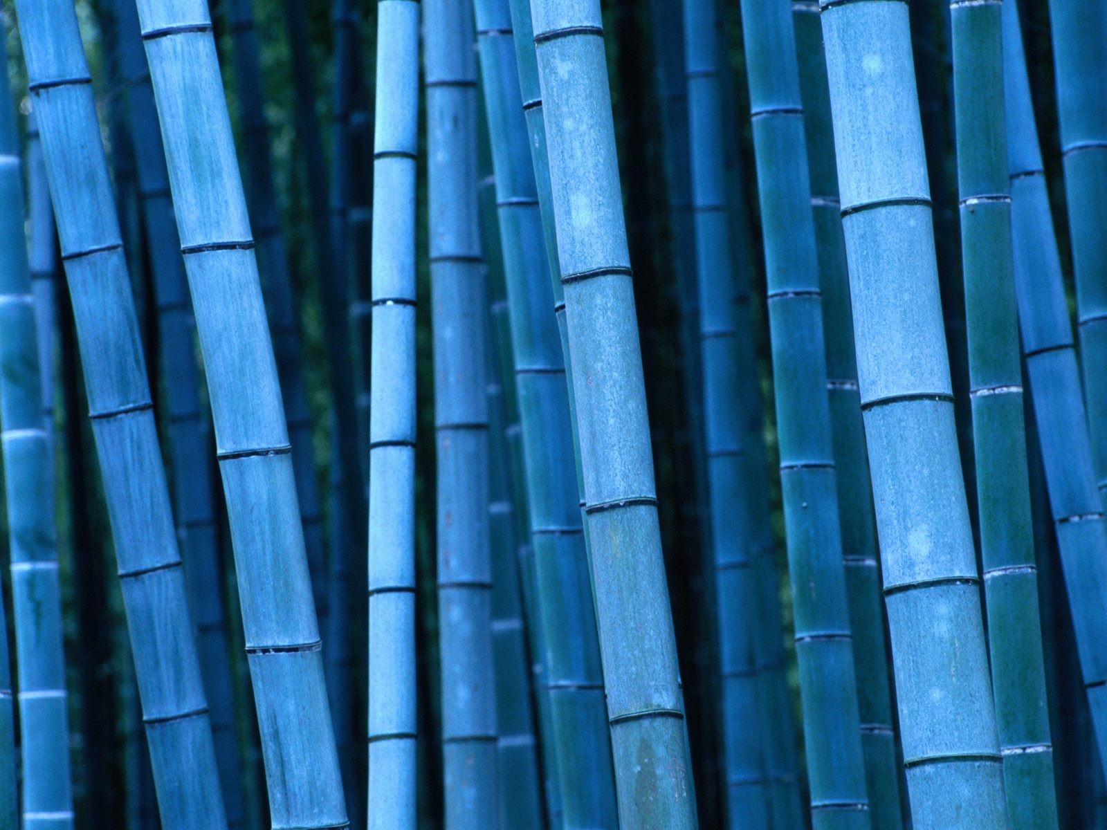 Bamboo Blue Presentation Template For Keynote Free Iwork